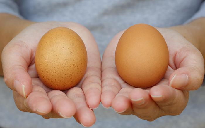 hur kollar man om ägg är gamla