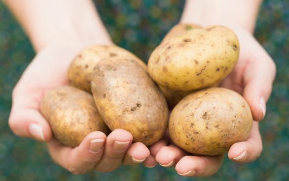gift i grön potatis