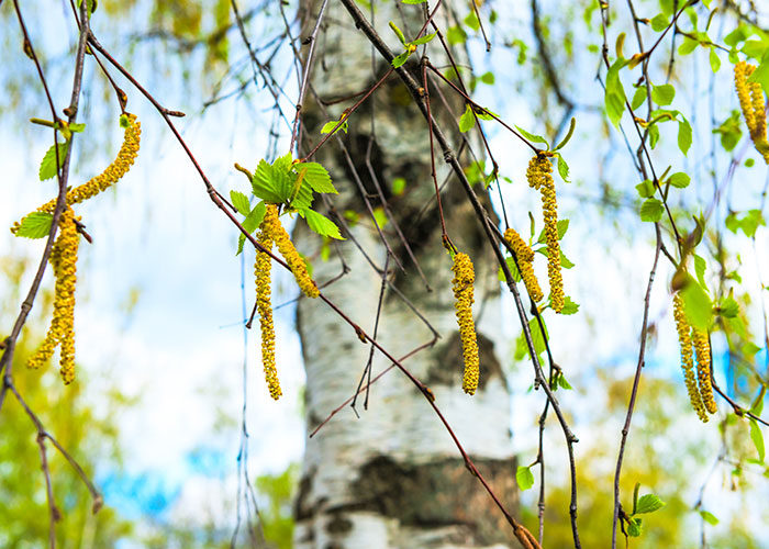 nasonex-pollenallergi