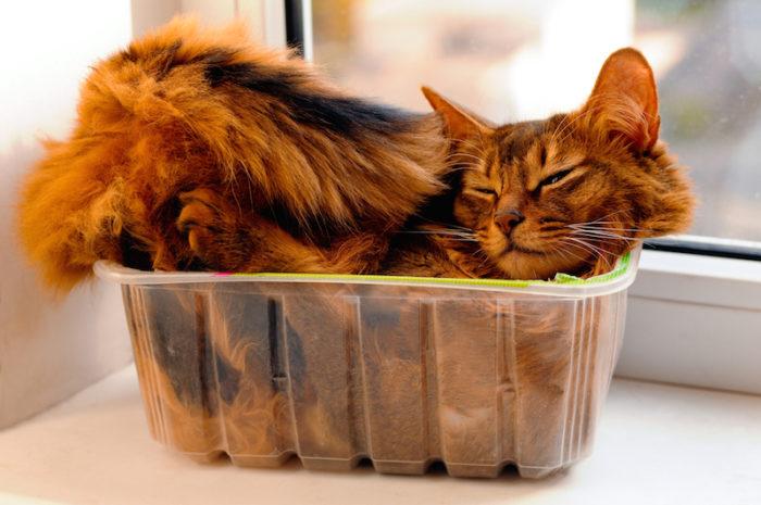vad gillar katter att äta