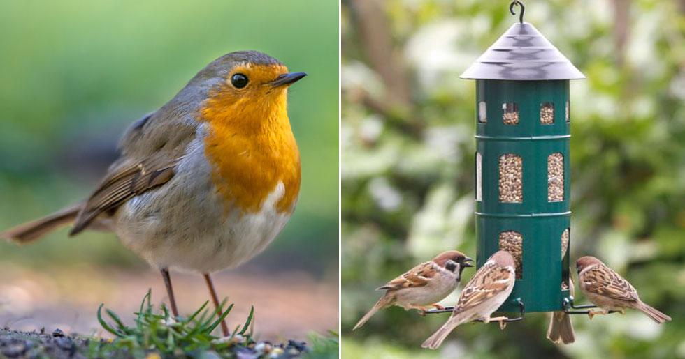 när ska man börja mata fåglarna