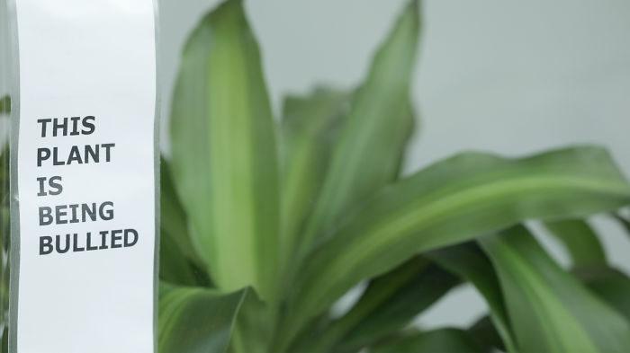 Ikea bad skolbarn mobba en växt i 30 dagar – se resultatet