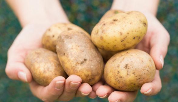 potatis med lite stärkelse