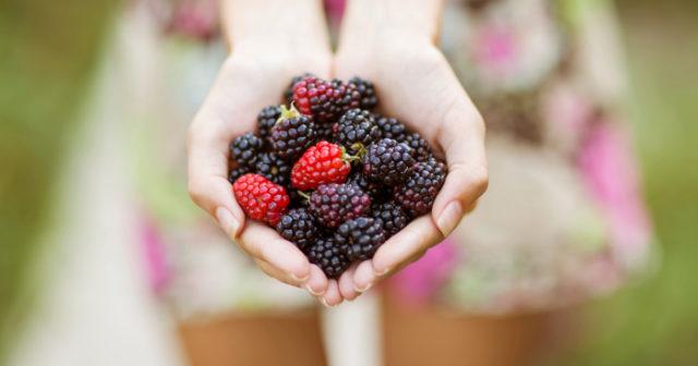 antioxidanter cancerframkallande