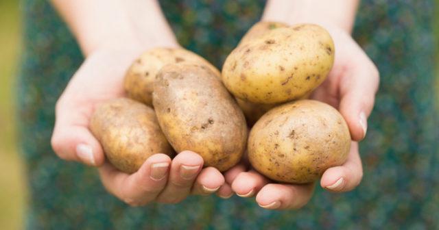varför kan inte potatisar gå