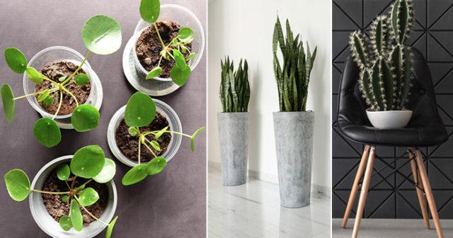 7 inomhusväxter som överlever höstmörkret
