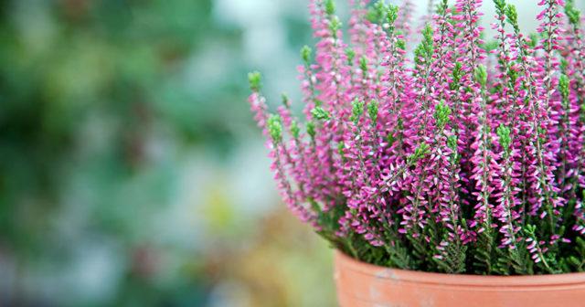 blommor som tål vinter
