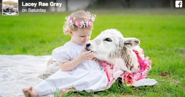 2-åringens och kalvens särskilda band: