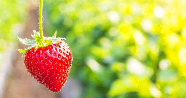 Så bra är jordgubbar för hälsan – 7 bevis