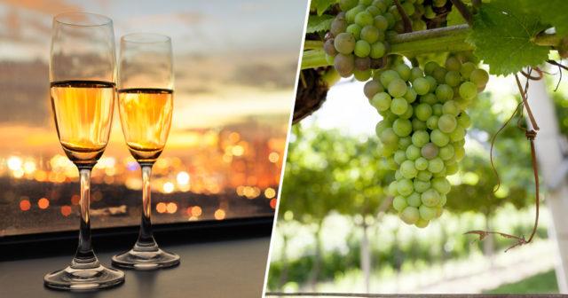 bästa erbjudanden på ny kollektion känt märke Skillnaden på champagne, prosecco och cava | MåBra