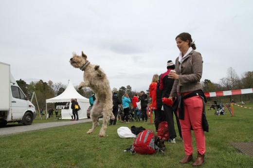 Gladaste vovven! Tror det är en Softie, Irish softcoated wheaten terrier. Sicken liten cooling ...