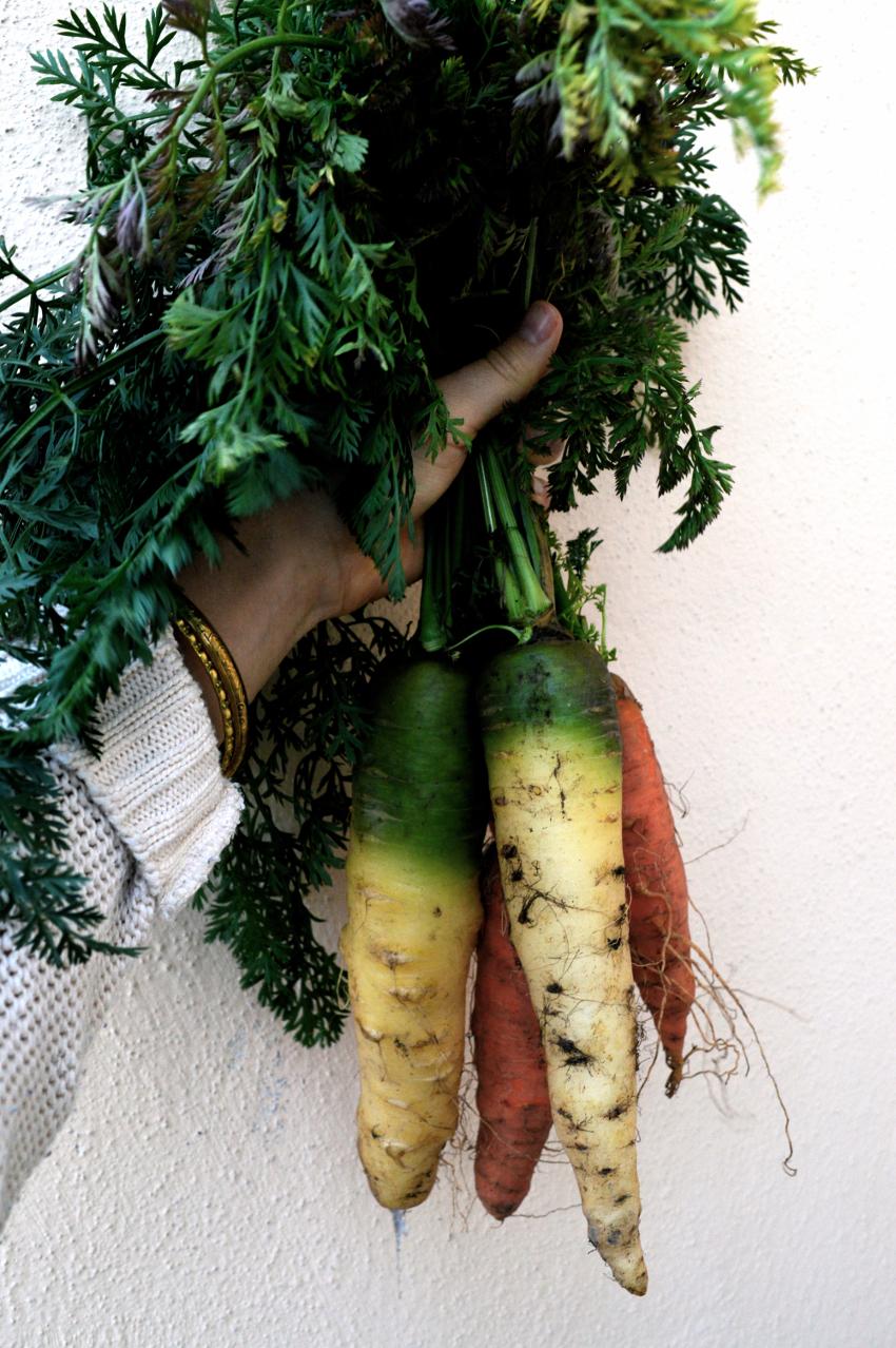 morötter supermat